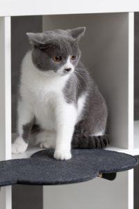 13 RYTE Catssup_Closeup