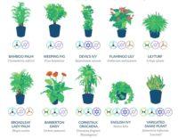 Save My Plant 9