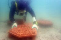 Enlarge Photo: Reformative Coral Habitats | Reef Tiles 12