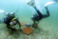 Enlarge Photo: Reformative Coral Habitats | Reef Tiles 13