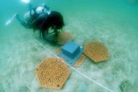 Enlarge Photo: Reformative Coral Habitats | Reef Tiles 14
