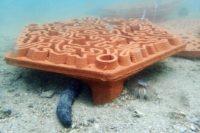 Enlarge Photo: Reformative Coral Habitats | Reef Tiles 15