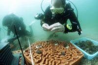 Enlarge Photo: Reformative Coral Habitats | Reef Tiles 16