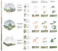 Enlarge Photo: Medicinal plants drive the organisation of both the planting scheme, the research plot and the organisation aspect of the site in terms of stakeholders who are orchestrated through the system. By CHAN Syl Yeng Michelle, WONG Wae Ki Sammi.