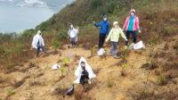 Mulching tree seedlings, Mui Wo.