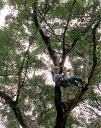 Tree climbing, HKU Kadoorie Center.