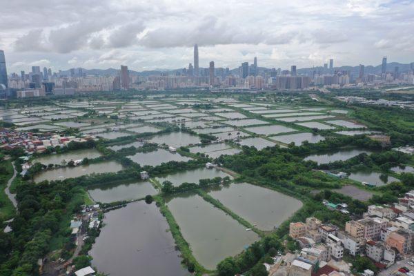"""Unprotected"" wetland areas in Deep Bay"