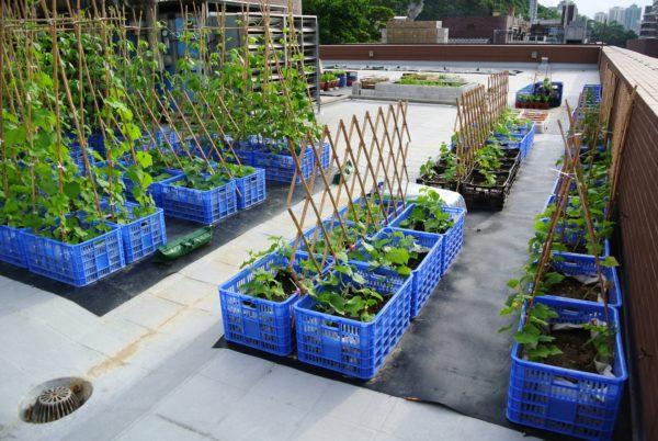 Enlarge Photo: Edible Roof 2