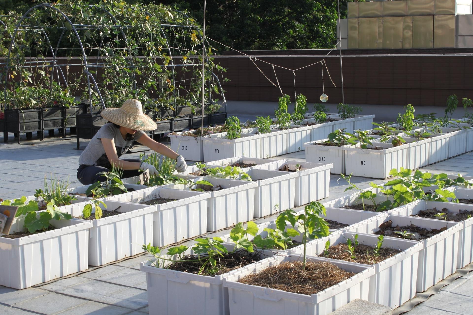 Edible Roof