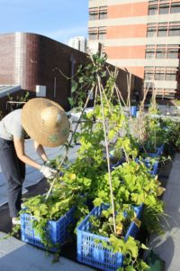 Enlarge Photo: Edible Roof 4