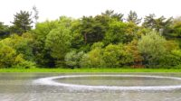 Refining Nature: The Landscape Architecture of Peter Walker 2