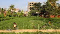 Yangon Ecologies: Landscape-responsive urban growth models for a region in transition 3