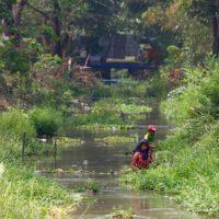 Yangon Ecologies 04