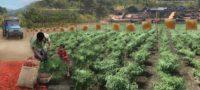 Landscape Planning Studio: Design on the Road to Burma 6