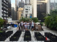 Investigating rooftop urban agriculture in Central Hong Kong