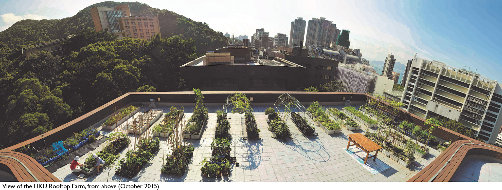The Edible Roof Initiative 1