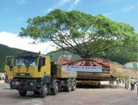 Tree Transplanting Metrics 1