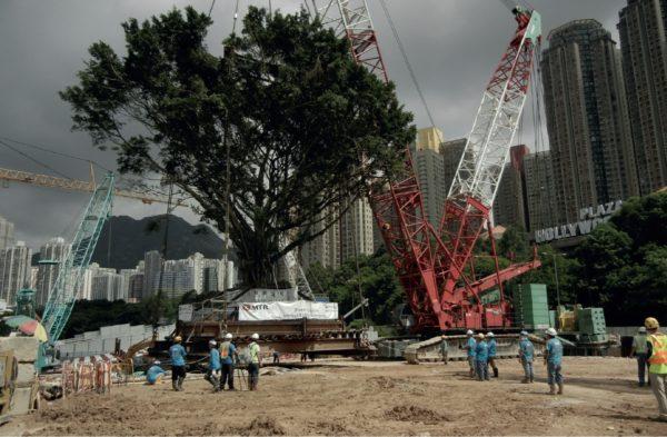Tree Transplanting Metrics 2