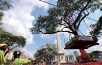 Tree Transplanting Metrics 3
