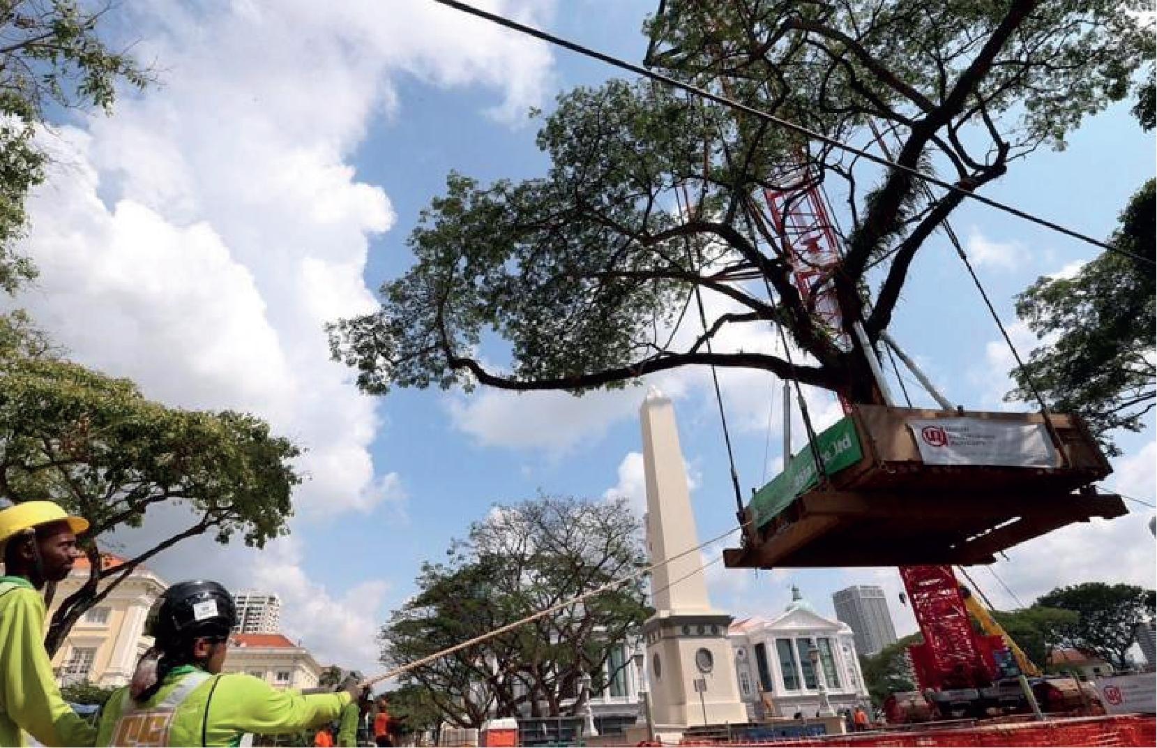 Tree Transplanting Metrics