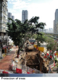 Trees in high density cities 2