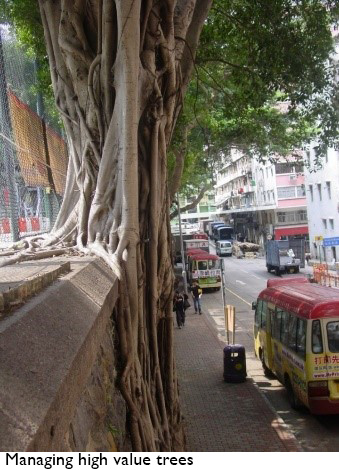 Managing high value trees