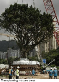 Trees in high density cities 4